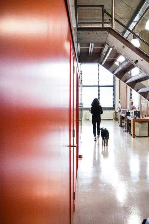 Gang met kantoorhond